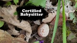 Certified Babysitter