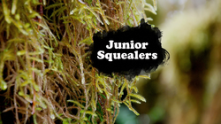 Junior Squealers