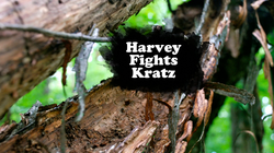 Harvey Fights Kratz