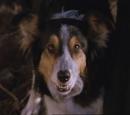 Toby (dog)