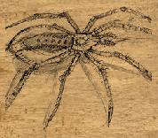 File:Spider body2.png
