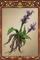 Root-rotten Flower