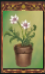 Potted Nameless Flower (Origins)
