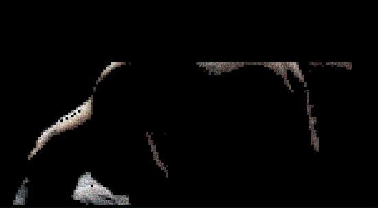 Dark-Knight-Rises-Viral-1