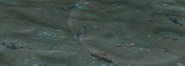 Deadfishgroup