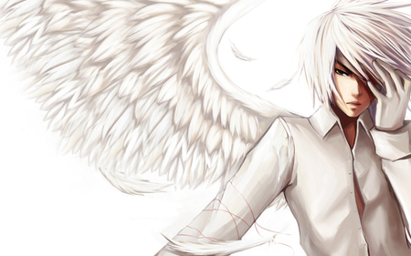 File:Bird wings kaze.jpg