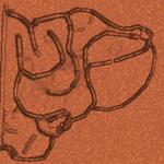 RedRevng shell