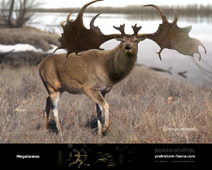 File:Irish Elk.jpg