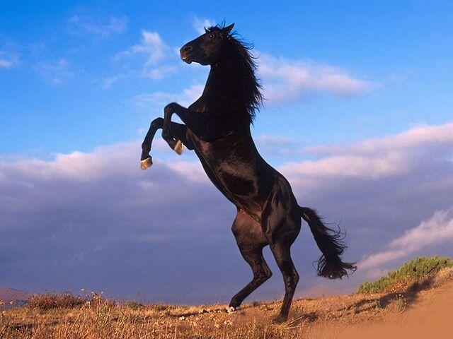 File:Best Horse Wallpapers.jpg
