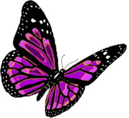 Butterfly PNG1054