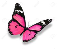 12203692-Pink-butterfly-isolated-on-white-Stock-Photo-heart