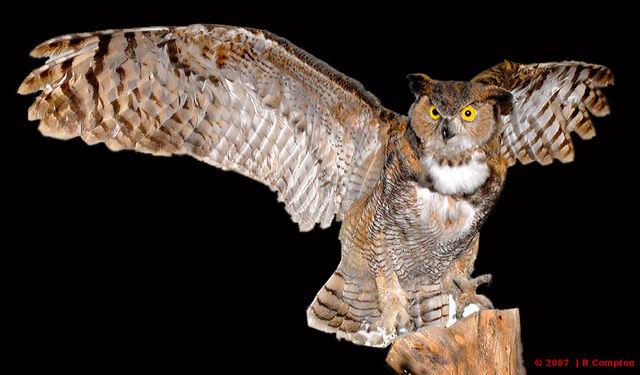 File:J105558-stuffed-owl-f.jpg