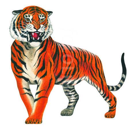 File:41570-bengal-tiger-illustration.jpeg