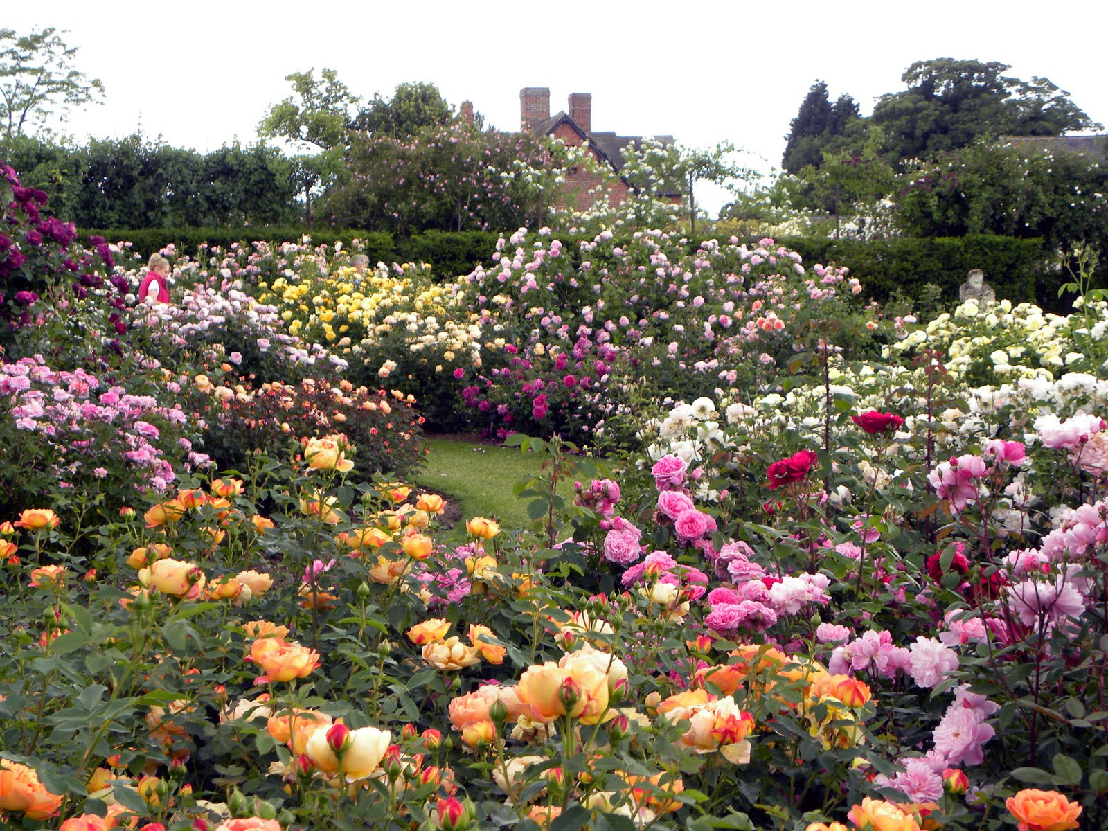 Charming Rose Garden | Beauxbatons Academy Of Magic Roleplay Wiki | FANDOM Powered  By Wikia