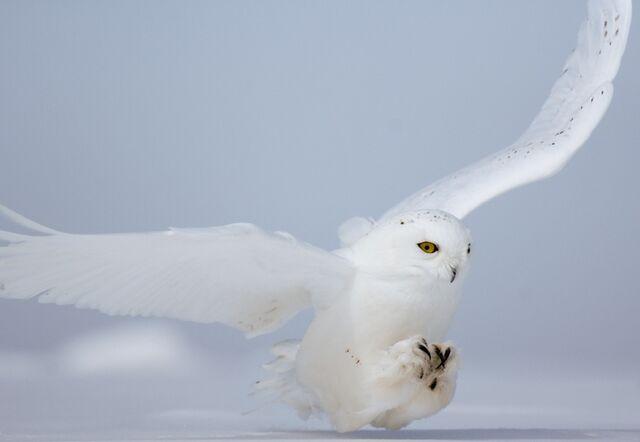File:Owl - Sabine.jpg