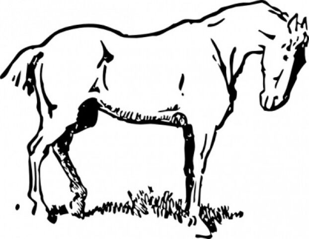 File:Small-eyed-horse-clip-art 425682.jpg