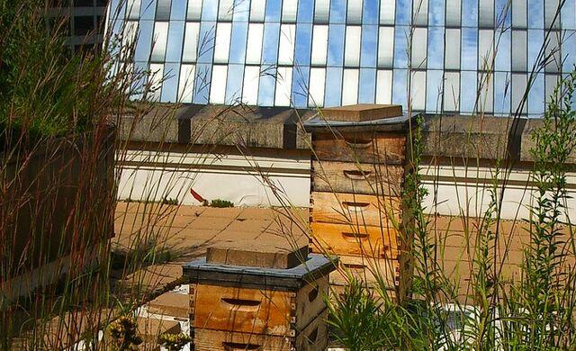 File:Urban beekeeping.jpg