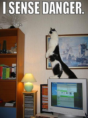 File:Funny cat pictures 019.jpg