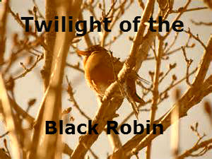 File:Robin3.jpg