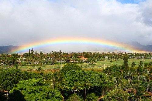File:Maui Wowie!.jpg