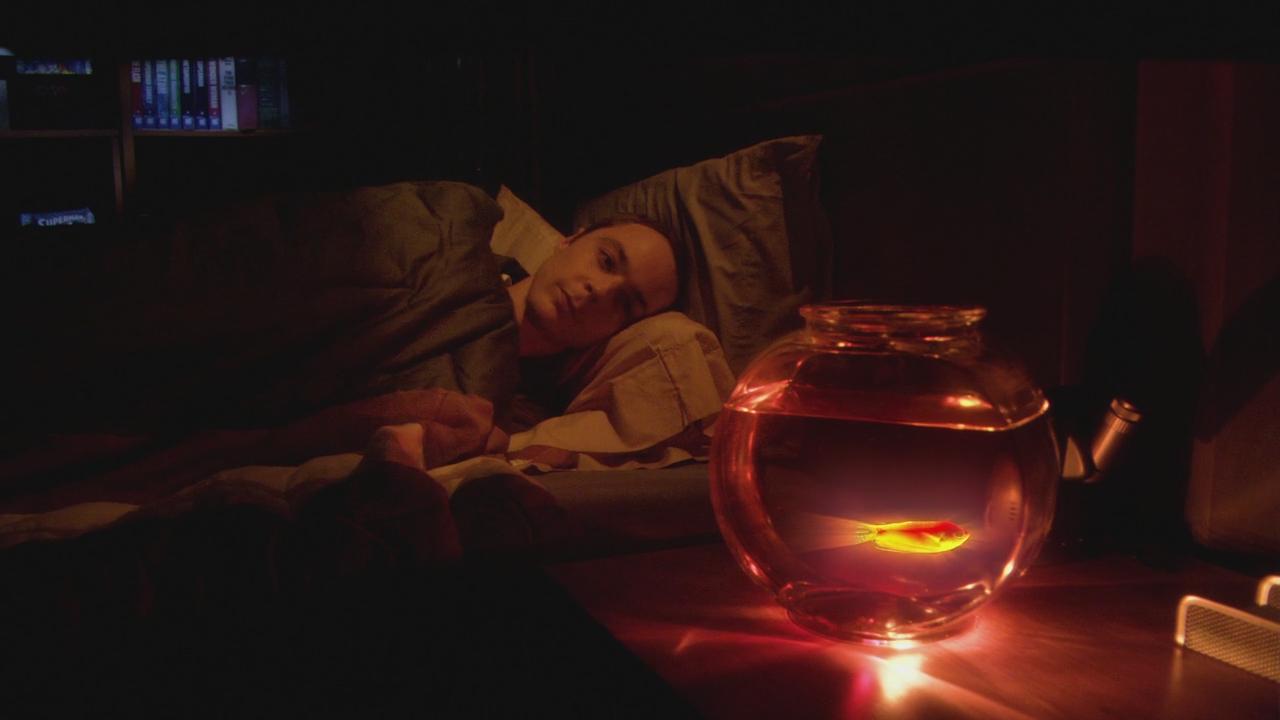 Night light wikipedia - The Luminous Fish Effect