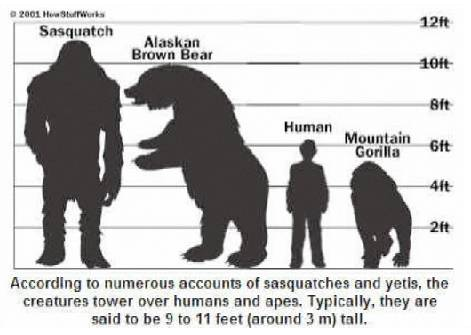 File:Sasquatch Height Chart.png