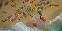 Hawaii Wildsurfers