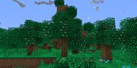 Flowering Oak Tree