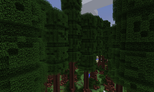 Redwood1 9 4