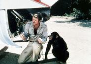 Steve chimp