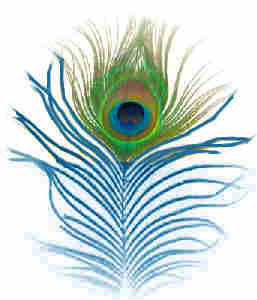 File:Blue feather.jpg