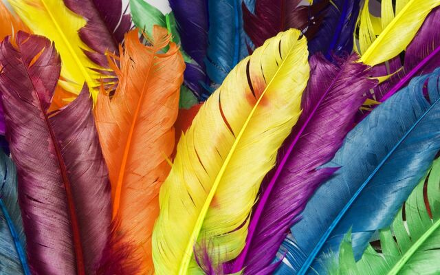 File:Feathers in Colors.jpg