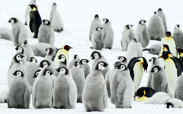 File:Antarctica Penguins.jpg