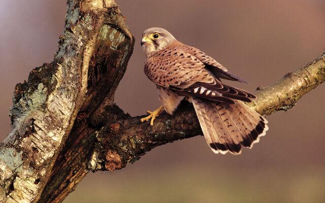 File:Birdsofprey17.jpg