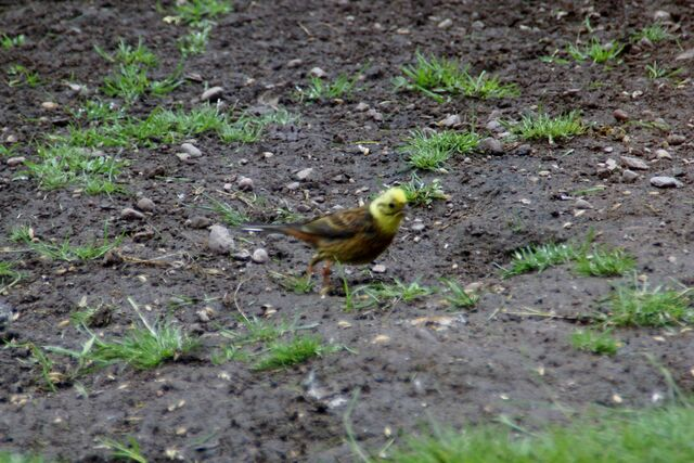 File:Odd bird 013.JPG