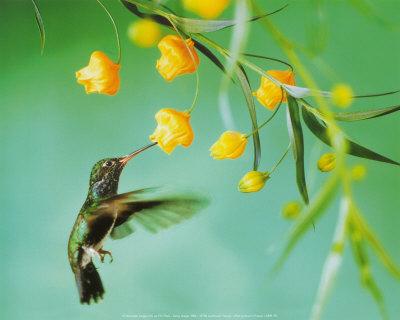 File:Flowers and Hummingbird.jpg