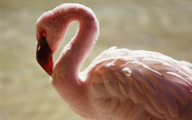 File:Beautifulbirds3.jpg