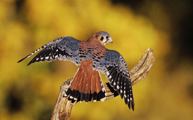 File:Birdsofprey4.jpg