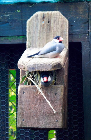File:On a nesting box made for two-9054.jpg