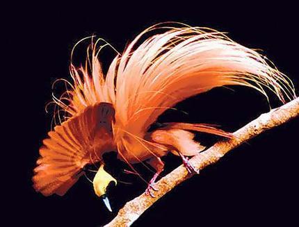 File:Bird wideweb 430x327,0.jpg