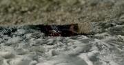 Morley dead S1E4