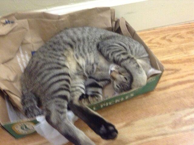 File:Cassie is sleepy.JPG