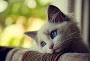Pretty-cat-photos-wallppaer
