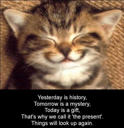 File:Cute-kitten-smiling-inspirational-cat-saying-motivational-kitty-photo.jpg