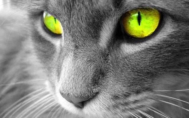 File:Glowpaw-waterclan-warrior-cats-22034742-1440-900.jpg