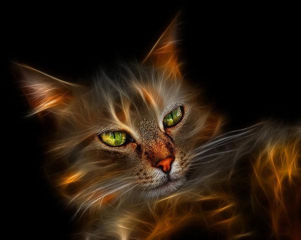 File:Pretty-Kitty-Wallpaper-cats-10547176-1280-1024.jpg