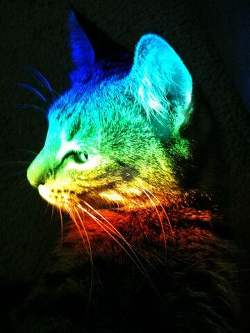 File:Rainbow Cat by jeswise.jpg