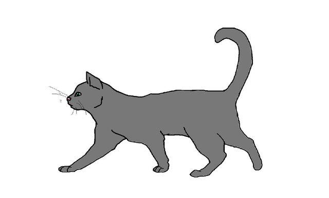 File:Good Cat!.jpg