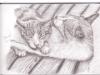 File:Thumbs two-random-cats-sharing-tongues.jpg