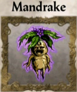HD.Mandrake.Edit